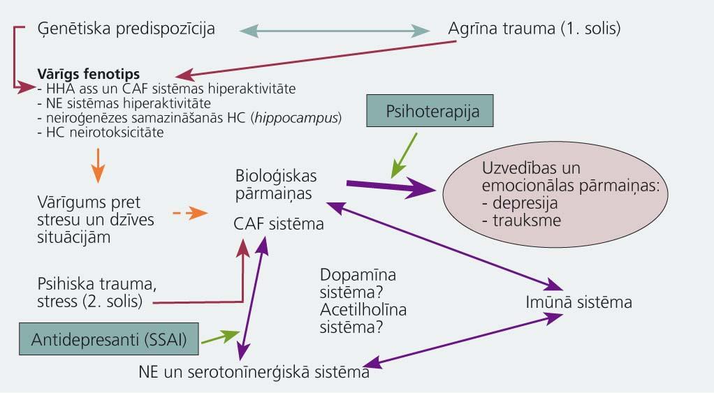 Imūnās sistēmas un CNS mijiedarbība depresijas attīstībā
