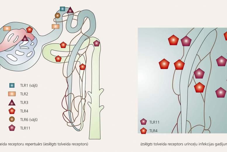 Komplicēta  urīnceļu infekcija