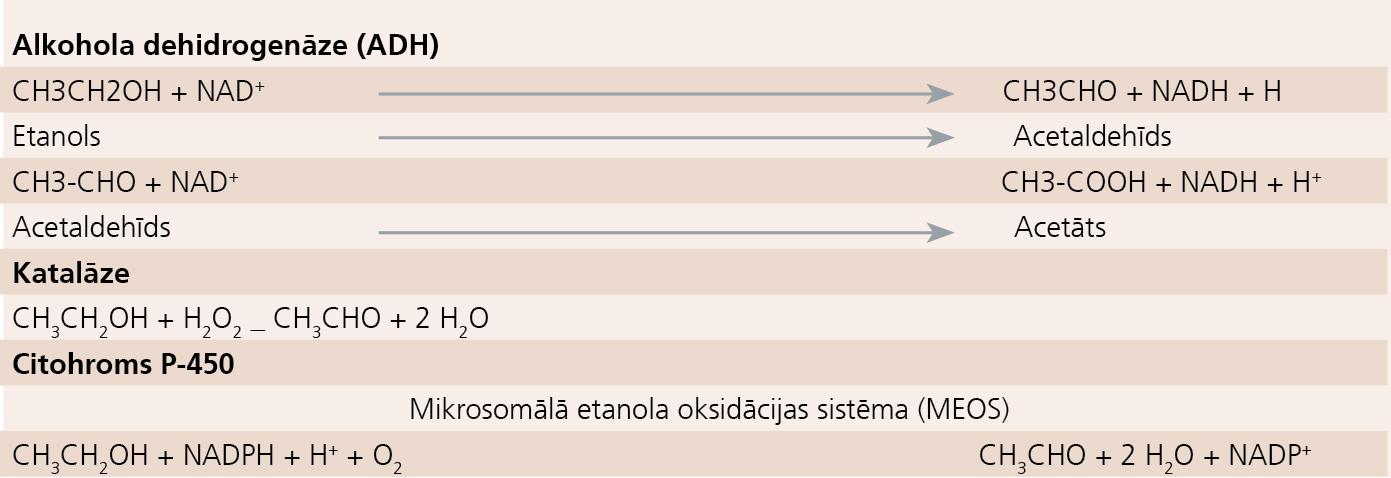 Etanola oksidācija fermentatīvā ceļā
