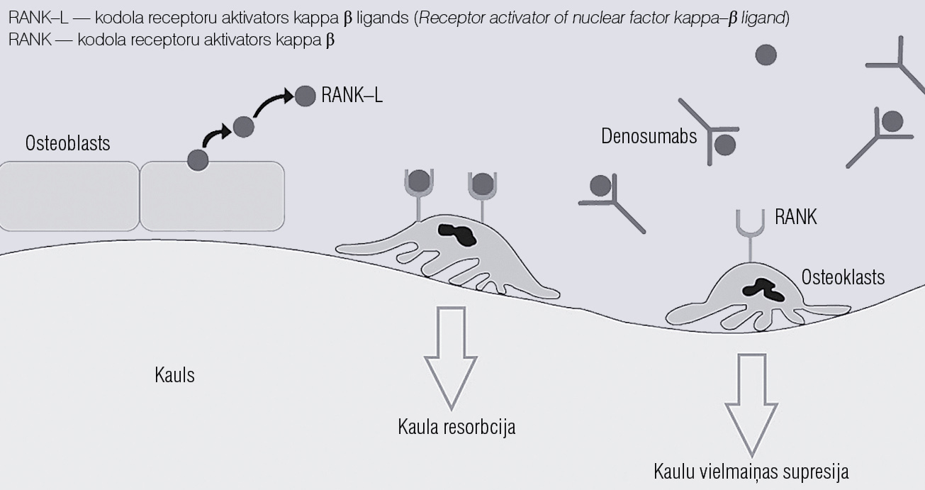 Denosumaba mijiedarbība ar RANK–L [5]
