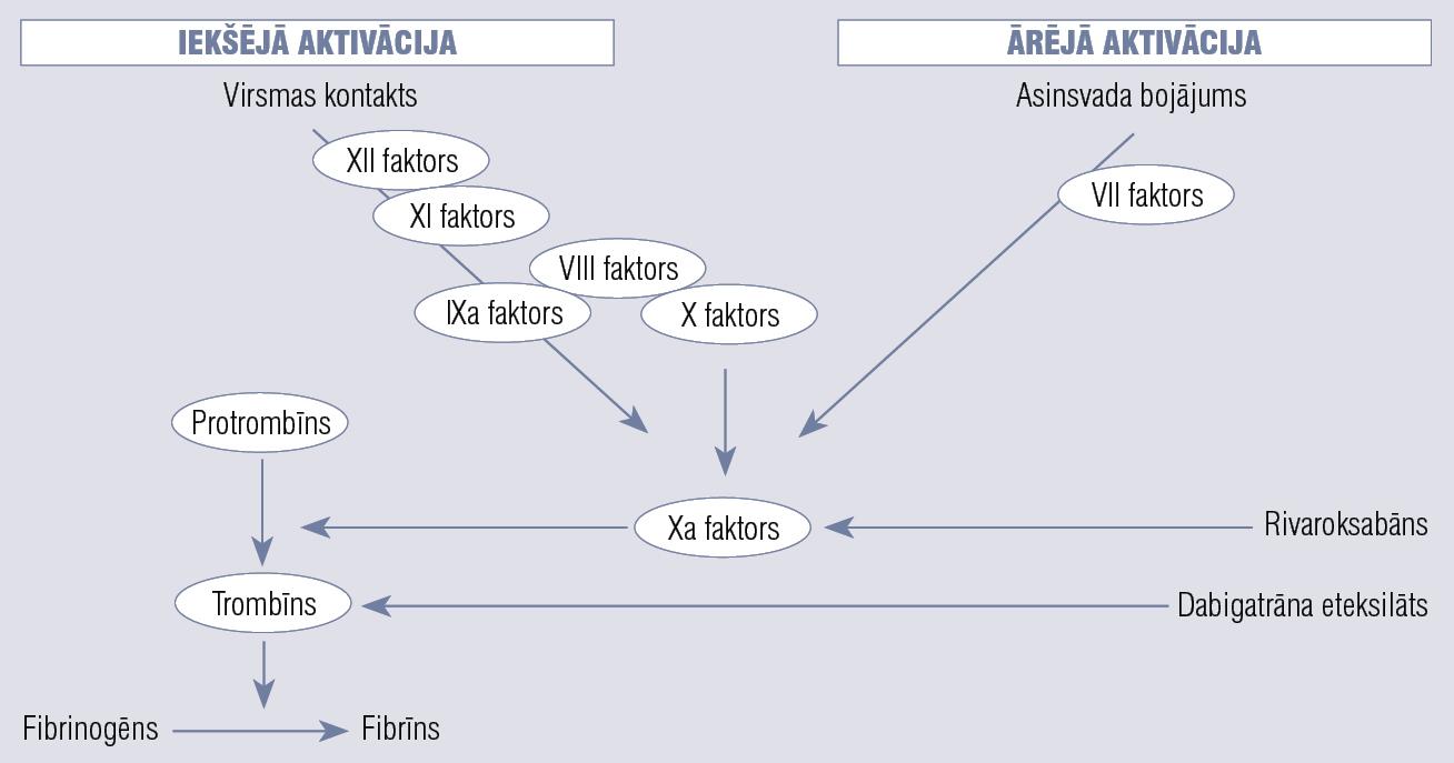 Rivaroksabāna un dabigatrāna darbības mehānisms (pārveidots pēc Brighton, 2010)