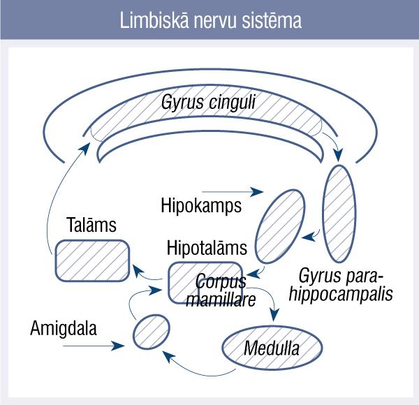 Limbiskā nervu sistēma