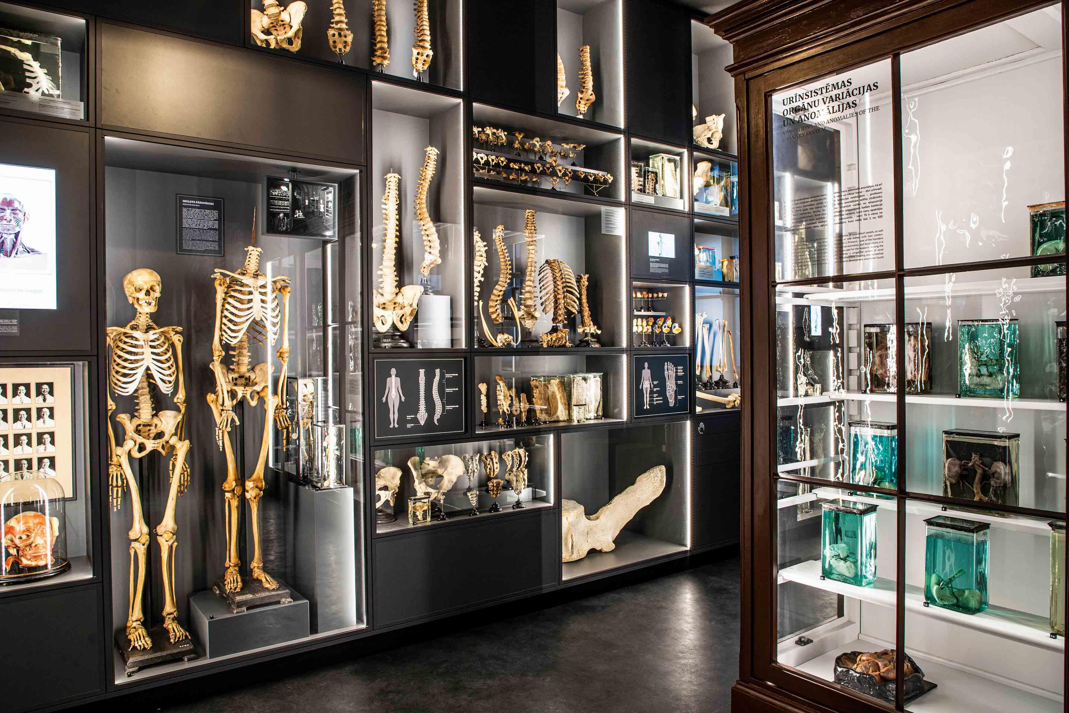 Jaunā Anatomijas muzeja ekspozīcijā saglabātas atsauces uz vēsturisko muzeja iekārtojumu, apvienojot to ar mūsdienīgu multimediālu ietvaru