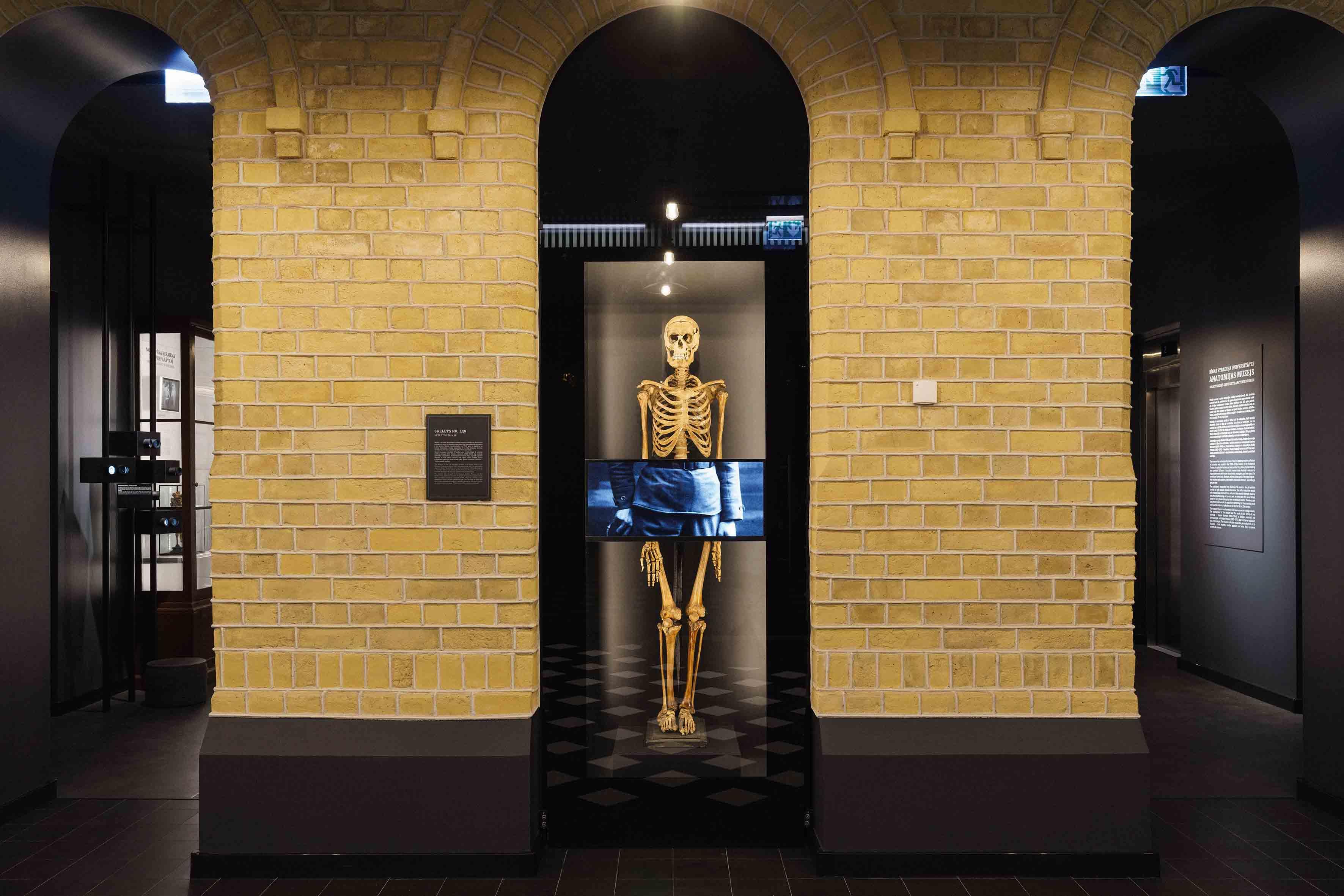 Muzejā ienākot, apmeklētāju sagaida pirmais eksponāts —  skelets, kuru muzejam 1925. gadā novēlējis Jānis Teodors Lukstiņš