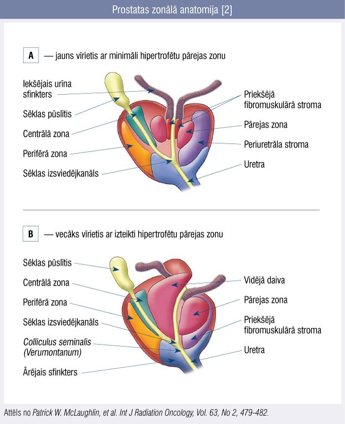 Prostatas zonālā anatomija [2]